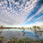 Navigating California's New Regulations for Wetlands and State Waters