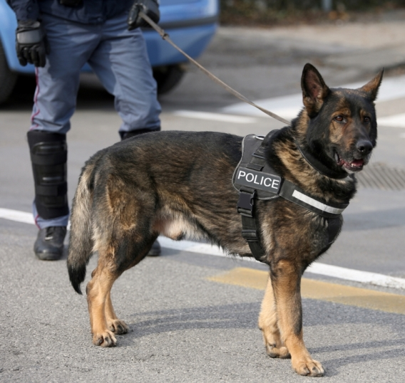 Ban on Officers Discussing K9 Program Violated First Amendment